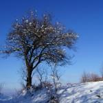 Дърво, небе и малко сняг