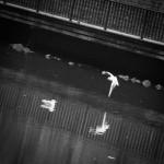 Джонатан - чайката, Брюксел