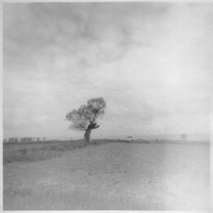Дърво и движение, с. Мусачево